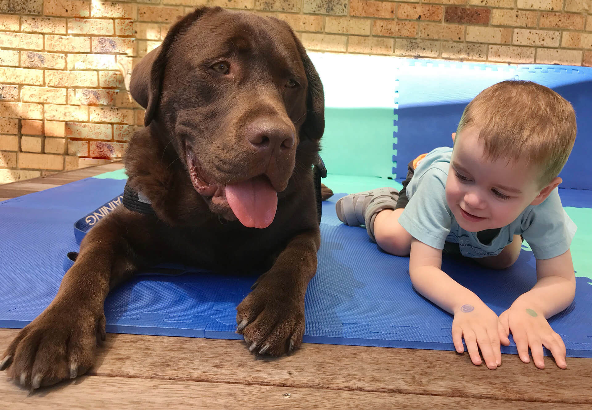 Animal Assisted Therapy for children – Kids Compass ...