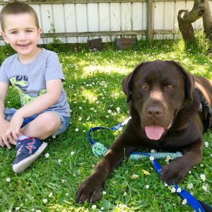 Animal-Assisted Therapy in Chirnside Park