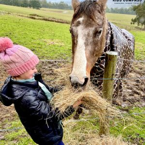 Equine-assisted social skills group